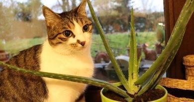 Leonie mit ihrer Aloe