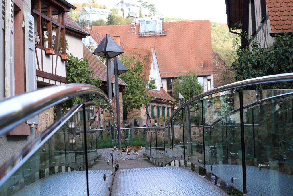Brücke in Schriesheim mit Kater Affinity