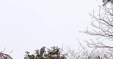 Kranich auf dem Baum