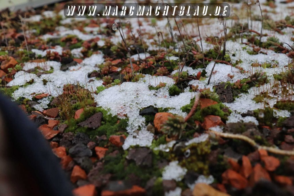 Schnee Rotweinwanderung Schriesheim 2018