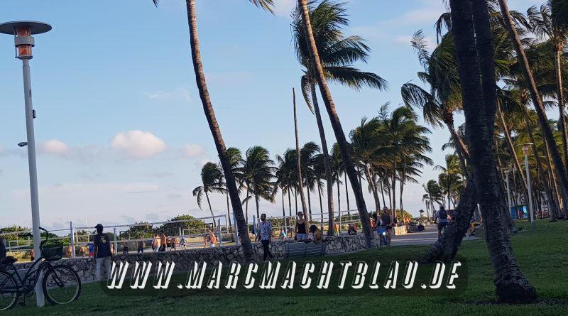 Palmen Ocean Drive