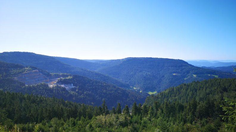 Schwarzwald Wald